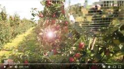 Æbler og Kulinarisk Sydfyn